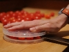 Easy Tomato and Grape Slicing via lilblueboo.com
