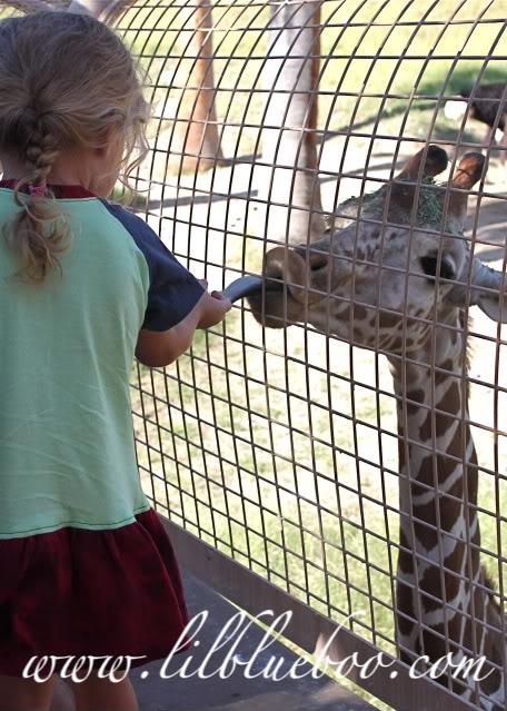 Number two reason I LOVE the fall giraffe via lilblueboo.com