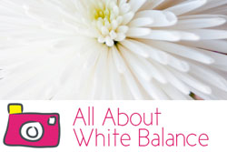 white balance by gayle vehar for lilblueboo.com