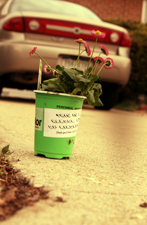 Random Acts of Kindness Week: give a neighbor a potted plant via Ashley Hackshaw / lilblueboo.com