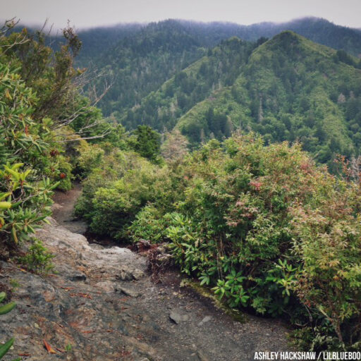 Inspiration Point at Mt Le Conte - Alum Cave Trail