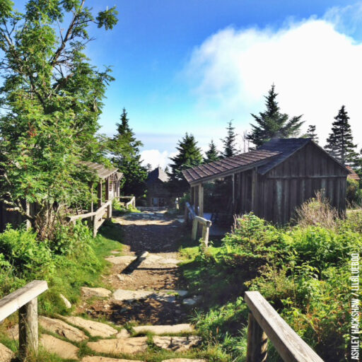 Mt LeConte Blog and Trails