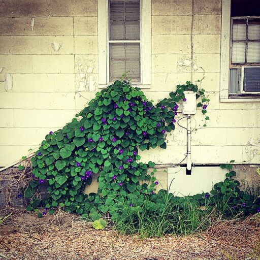 An Elephant Topiary in Bryson City