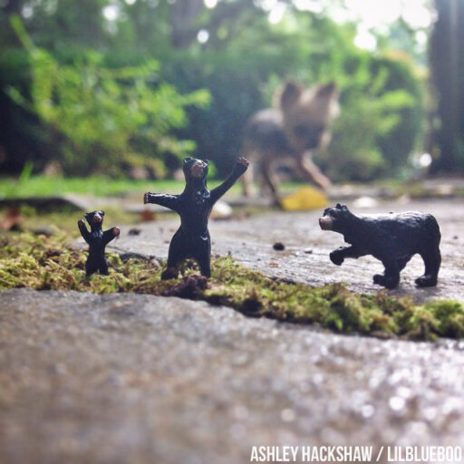 tiny figures photography - smoky mountain black bears