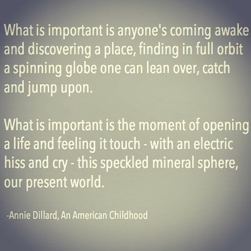 annie dillard seeing summary essay Pilgrim at tinker creek by annie dillard - seeing summary and analysis.
