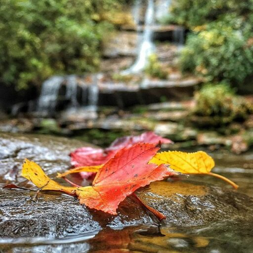 Deep Creek - Bryson City - Fall Color in the Smoky Mountains