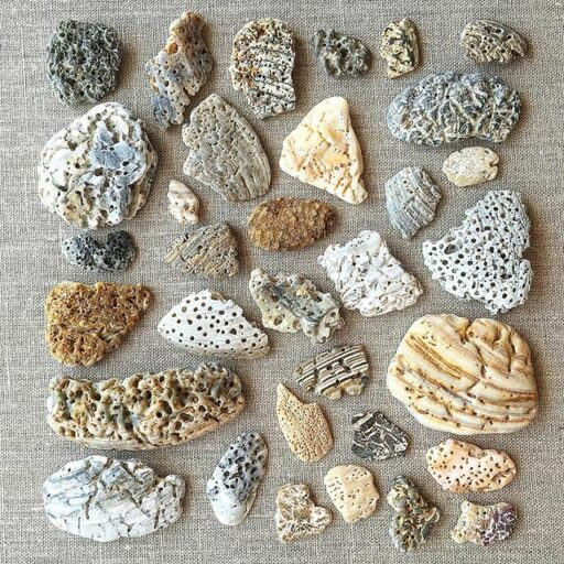 Alien Seashells - eroded shells from the beach