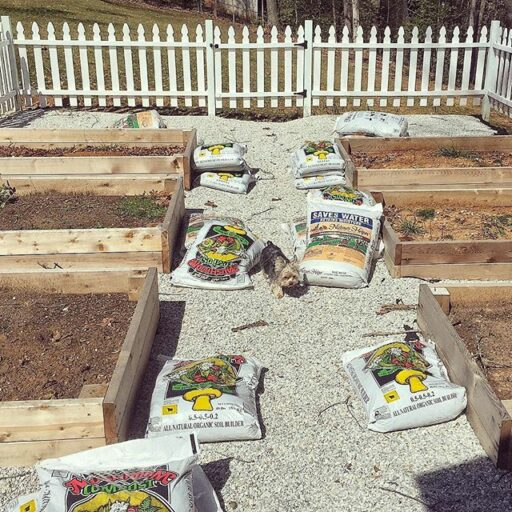 The Amateur Farmer - Starting the spring garden