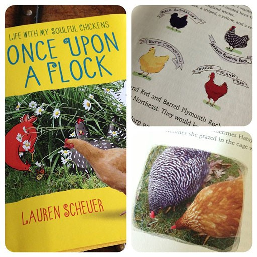 Book on chickens - Once upon a flock