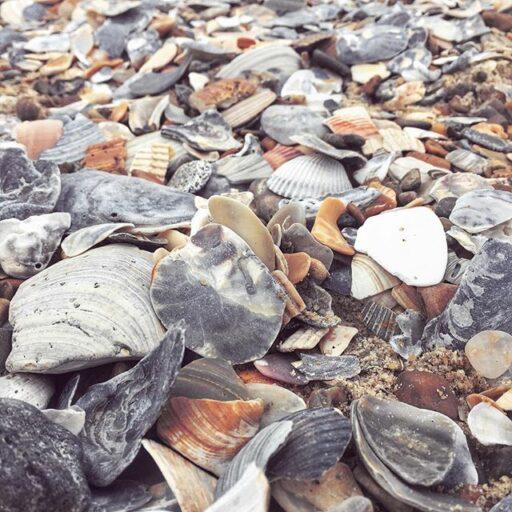 Seashells at Cape Hatteras