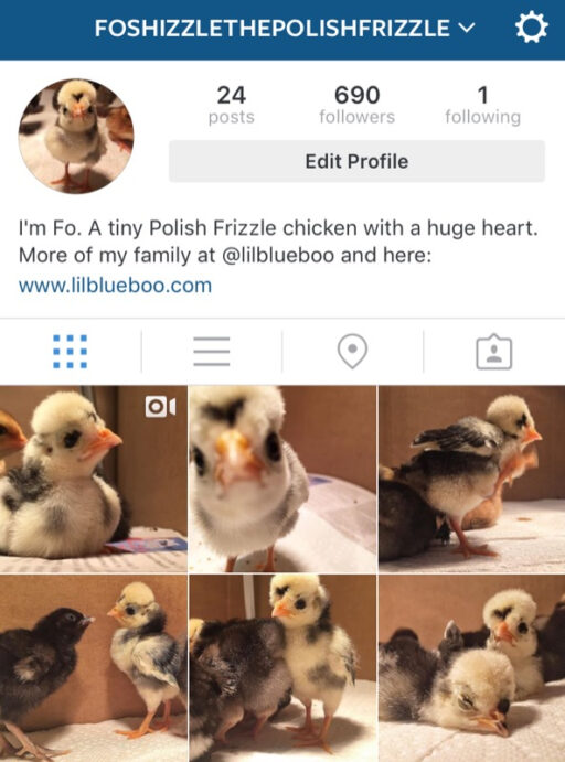 Cute Animals and Pets on Instagram
