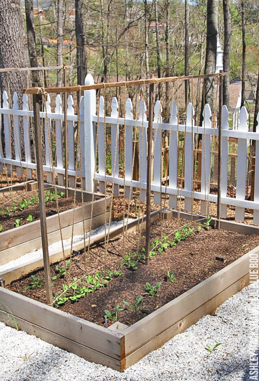 A Trellis for Snap Peas and Tomatoes