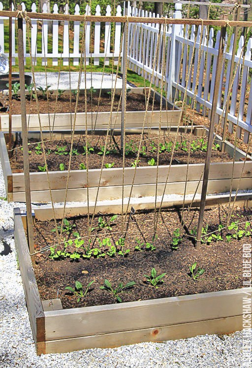 How to Build a Trellis for Growing Peas - or trellis for Tomatoes