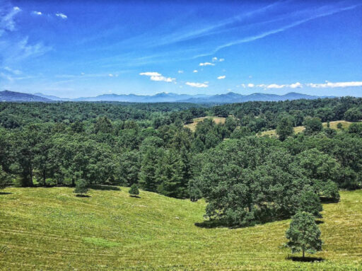 Things to do in Asheville - Biltmore Estate