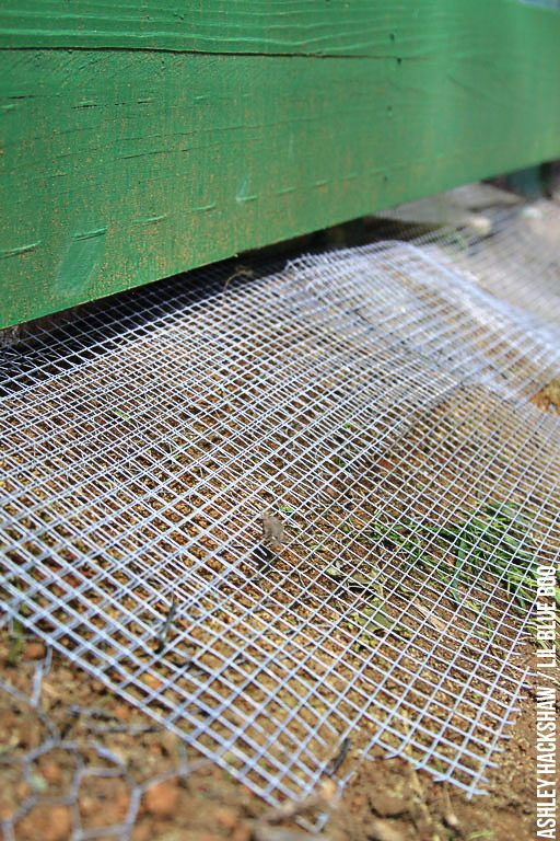 how to build a predator proof chicken coop