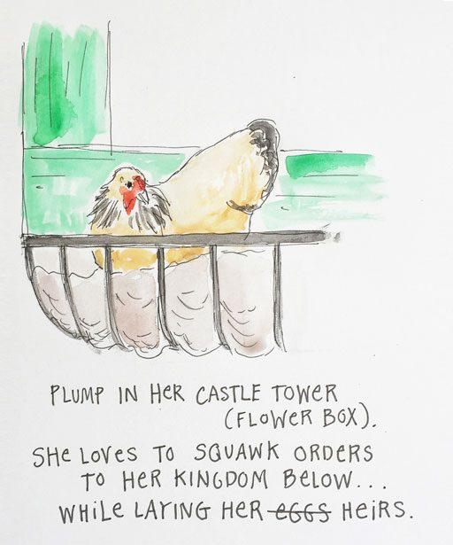 Chicken in the flower box