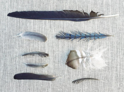 Found feather collage