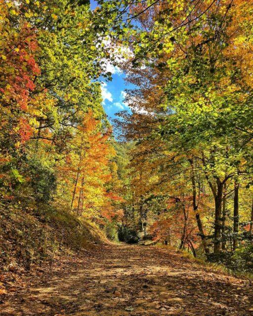 Fall Color Bryson City, NC - Buffalo Creek Cabin Rentals