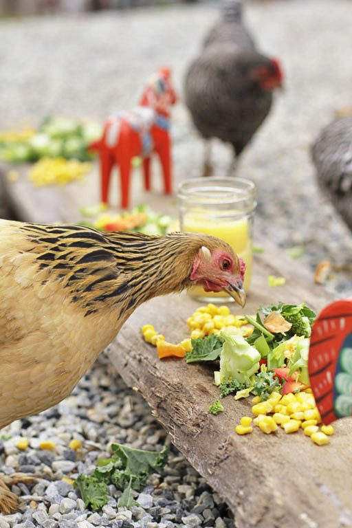 Thanksgiving for Chickens