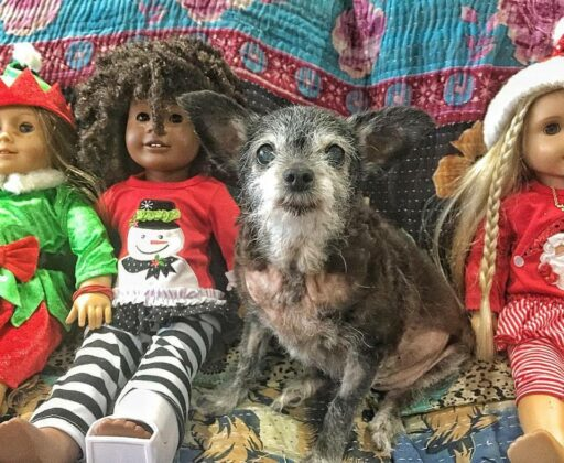 Happy the Dog and her American Girl Doll Friends