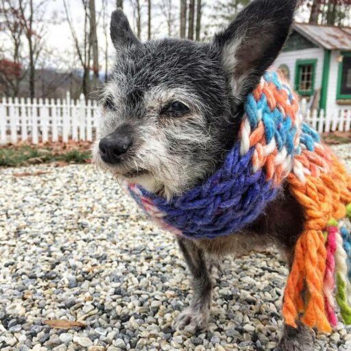 Senior Dog Adoption / Rescue Dog - Happy the Happiest Dog