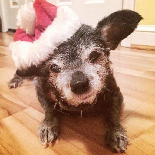 Happy the Happiest Dog - Adopting a Senior Dog - senior dog rescue
