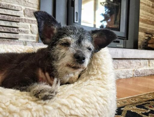Stories about old dogs - Happy the Happiest Dog - Our Senior Dog Adoption