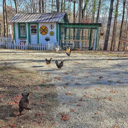 happyandthechickens