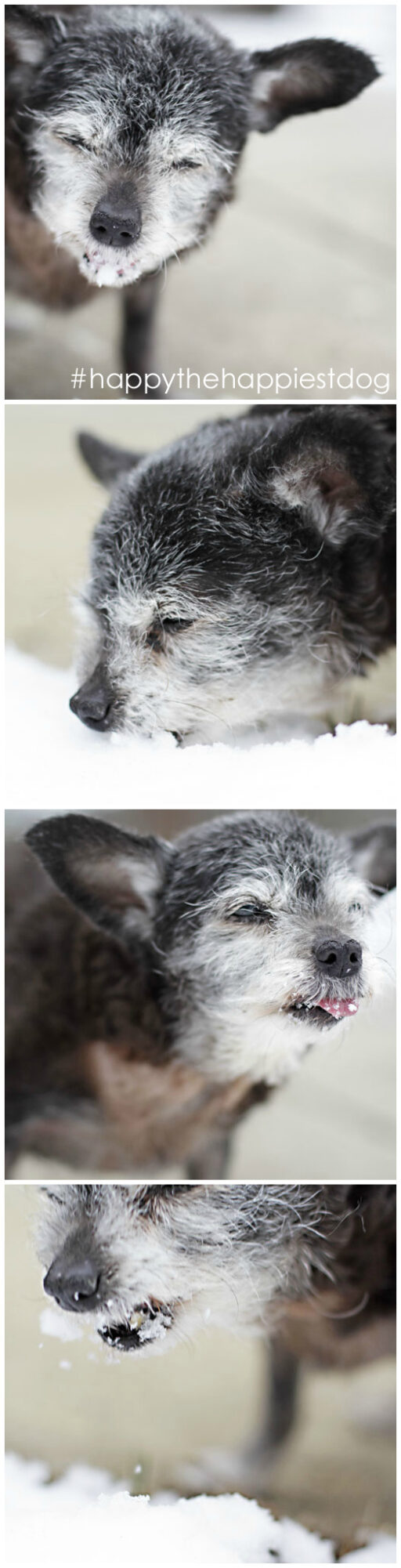 Happy the Happiest Dog - Senior Rescue - Dog Adoption