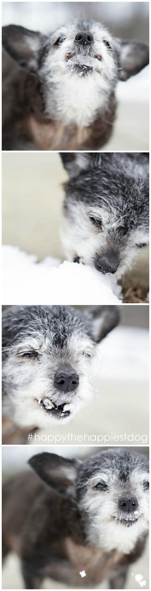 Happy the Happiest Dog - Senior Rescue - Dog Adoption