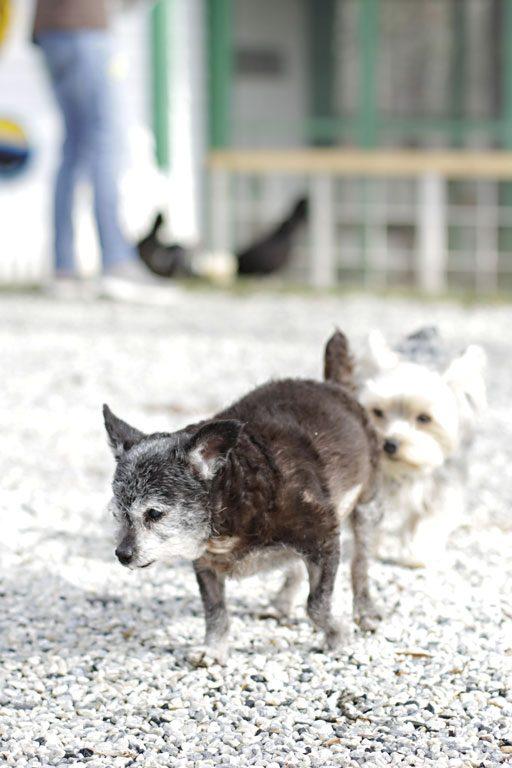 Senior Dog Adoption Story - Happy