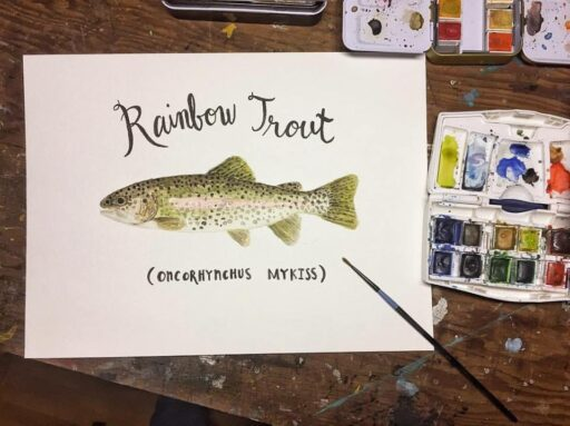 Daily Painting - Rainbow Trout - Watercolor