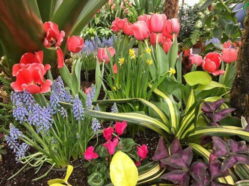 Spring at the Biltmore Estate in Asheville - Conservatory Blooms