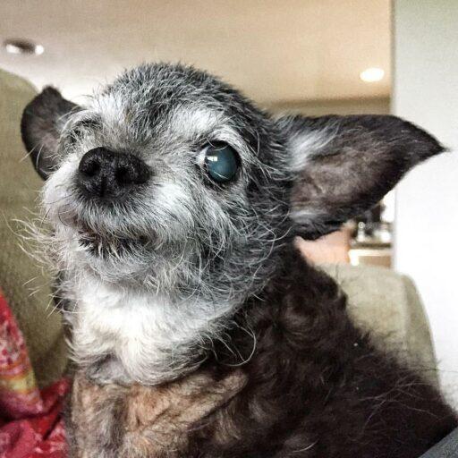 Happy the Happiest Dog - Ashley Hackshaw / Lil Blue Boo