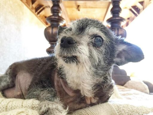 Happy the Happiest Dog - The Many Expressions of Happy - Our Senior Rescue Dog