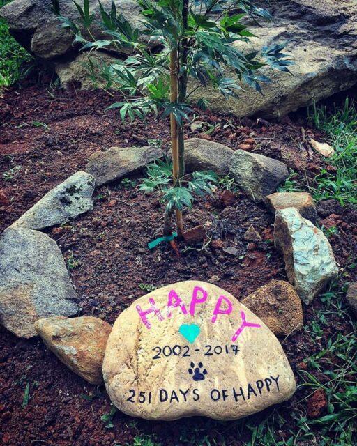Happy the Happiest Dog - Happy's Grave
