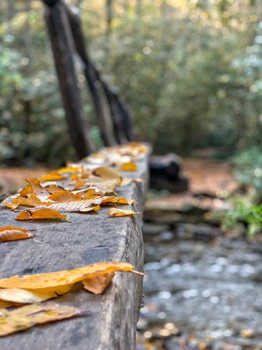 Indian Creek Great Smoky Mountains National Park